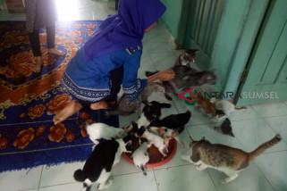 Komunitas merawat kucing terluka di Palembang
