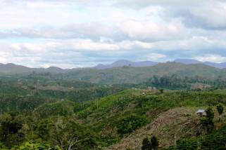 Pemkab Musi Banyuasin galakkan penghijauan hutan