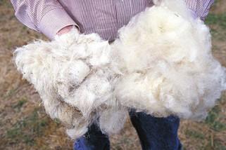 Bulu domba dapat melembabkan rambut dan kulit